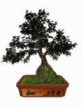 Hornbeam tree bonsai - 3D render Stock Photos