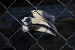 An hornbil Stock Photo