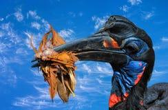 Hornbill à terra Abyssinian Fotos de Stock Royalty Free