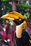 hornbill Στοκ Φωτογραφίες