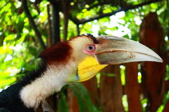 A Hornbill Royalty Free Stock Photography