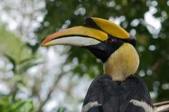 hornbill Стоковое Фото