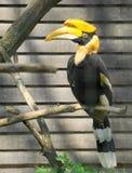 Hornbill stock foto's