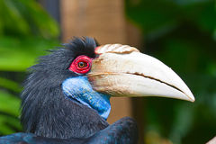 Hornbill Stock Photos