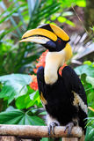 Hornbill Royalty-vrije Stock Foto's