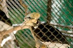 Hornbill is big bird Stock Image