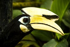 Hornbill bird Stock Image