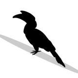 Hornbill bird black silhouette animal Royalty Free Stock Photography