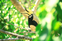 Hornbill bird on branch Stock Photo