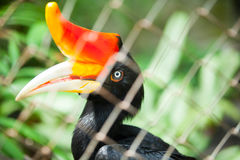 Hornbill bird Stock Photography