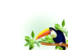 A Hornbill on Branch and Leaves Background Stock Photography