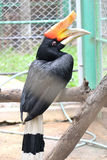 Hornbill in cage. Close up hornbill in cage Royalty Free Stock Photo