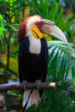 Hornbill. Colorful and beautiful birds Royalty Free Stock Image