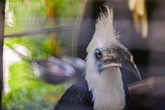 Hornbill im Käfig lizenzfreie stockbilder