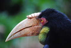 Hornbill Profile Stock Images