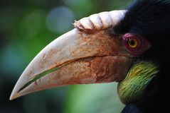 Hornbill Profile Royalty Free Stock Images
