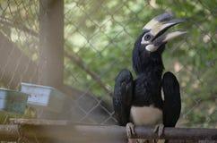Hornbill som kramas på en journal Arkivfoton