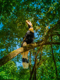 Hornbill on the tree Stock Photo