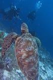 Green Sea Turtle off Balicasag Island, Panglao, Bohol, Philippines Stock Photo