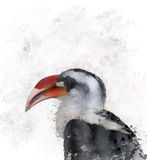 Hornbill Watercolor Stock Photography