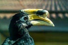 Hornbillengelska som fågeln parkerar Royaltyfri Bild