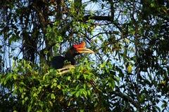 Hornbillfågel i ett träd arkivfoto