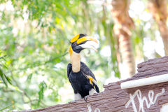Hornbills. Close up hornbills sitting on branch in the zoo royalty free stock images