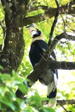 Hornbills on the tree Is a big bird stock photo