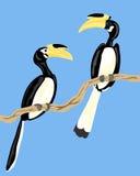 Hornbills pezzati di Malabar Fotografia Stock Libera da Diritti