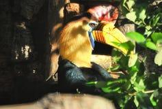 Hornbills profil Royaltyfria Foton