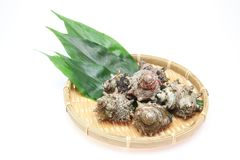 Horned тюрбан на бамбуковом дуршлаге Стоковое Изображение RF