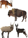 Horned animals collection. Isolated on white background Royalty Free Stock Photography