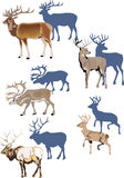 Horned animals with shadows. Horned animals collection isolated on white background Stock Images