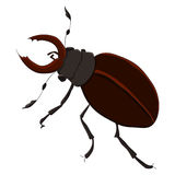 The horned beetle.  illustration. Drawing by hand. Royalty Free Stock Photography
