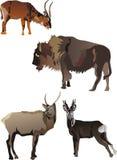 horned djursamling Royaltyfri Fotografi
