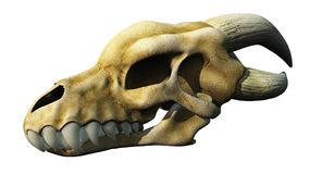 Horned Dragon Skull Stock Photo