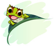 Horned frog cartoon. Illustration Stock Image