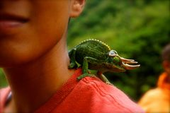 Horned lizard pet on shoulder of boy. Came across this unnamed hiker on a jungle trail in Maui`s Iao Valley. The lush greens of the Maui Hawaii Iao Valley jungle stock image