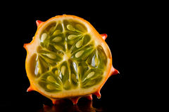 Horned mellon Royalty Free Stock Image