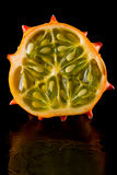 Horned mellon Royalty Free Stock Photography