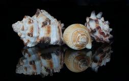 Horned och spirala skal royaltyfri foto