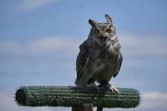 Horned owl with open beak looking at the camera on blue sky background with clouds royalty free stock photos