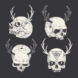 Horned Skulls Royalty Free Stock Image