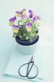 Horned violet arkivfoton