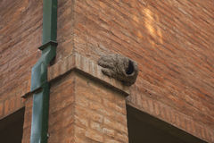 Hornero nest on brick wall building Royalty Free Stock Image