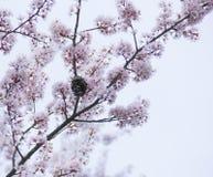 Hornet's nest stock image
