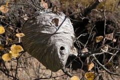 hornet φωλιά Στοκ Φωτογραφία