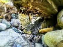Hornet Hive. By the creek on a log in the rocks royalty free stock photo