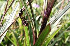 A hornet . stock image