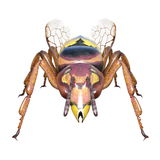 Hornet Royalty Free Stock Images